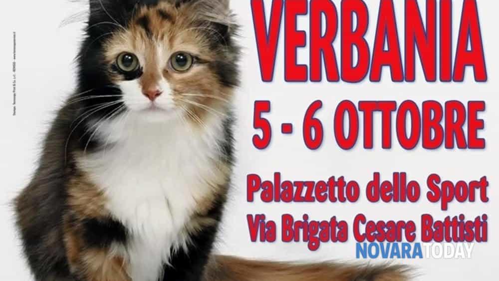 i gatti più belli del mondo al palasport di verbania-2