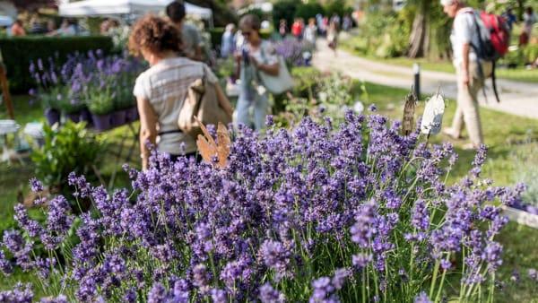 """Miasino: torna """"Menta e Rosmarino"""", il green festival dedicato all'arte, il giardino e il paesaggio"""