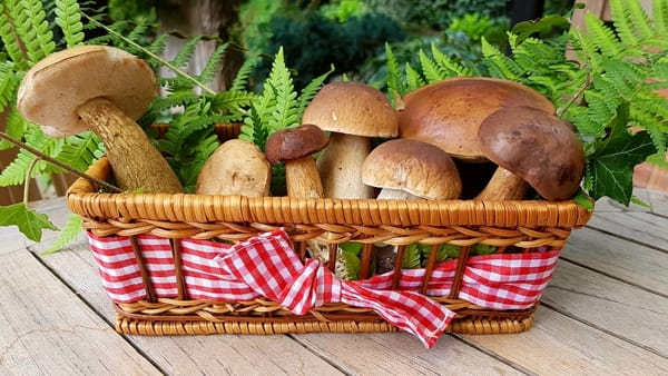 Torna la Sagra del fungo in Valle Anzasca