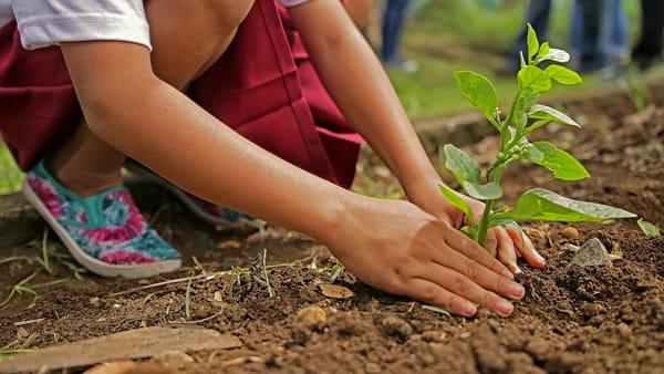 """""""Dai...piantala"""": a San Nazzaro la camminata ecologica con piantumazione"""