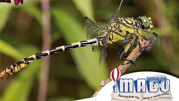 """farfalle, libellule e insetti al museo meina sul lago maggiore con la mostra digitale """"micromacro""""-4"""