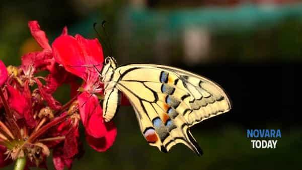 """Farfalle, libellule e insetti al Museo Meina sul Lago Maggiore con la mostra digitale """"Micromacro"""""""