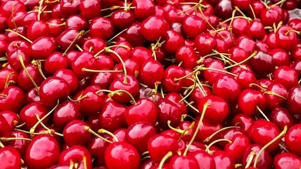 Anzola: torna la Sagra delle ciliegie